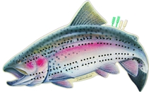 Name: RAINBOW-TROUT-CRIB-BOARD Filename:3852844.jpg