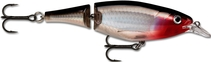 Name: X-RAP-JOINTED-SHAD Filename:3855771.jpg - Synonyms to describe this image are: xrap