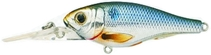 Name: THREADFIN SHAD Filename:3869389.jpg